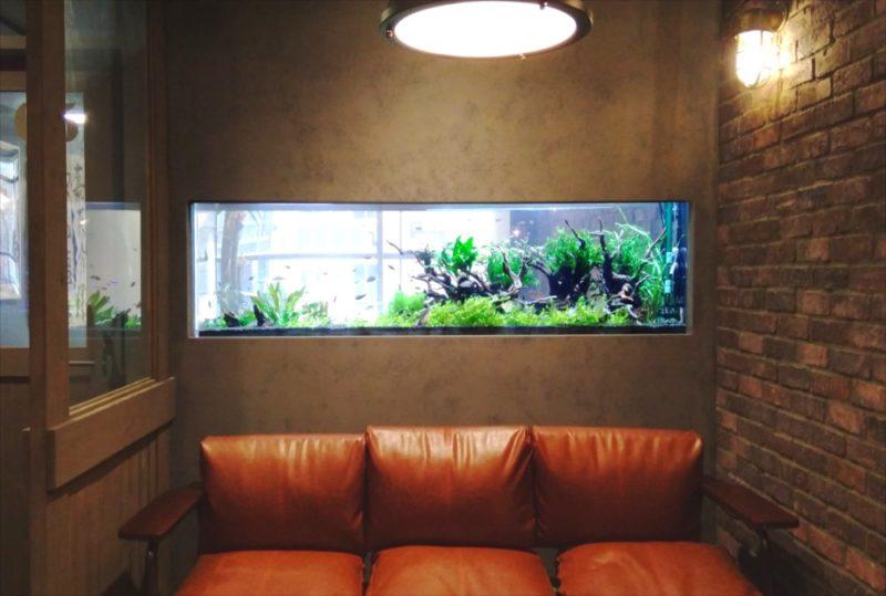 渋谷区 オフィス 大型淡水魚水槽 設置事例 その後 水槽画像3