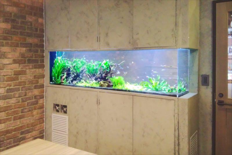 渋谷区 オフィス 大型淡水魚水槽 設置事例 その後 水槽画像5