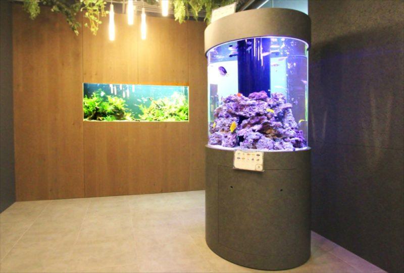 オフィス 円柱海水魚水槽・大型淡水魚水槽を設置  水槽画像1
