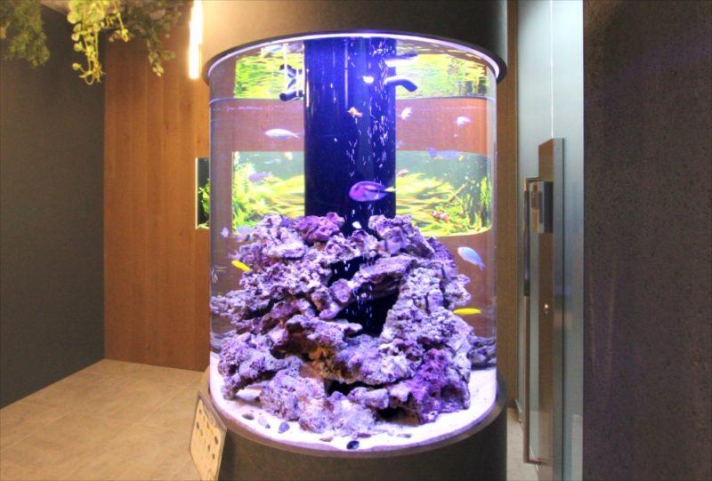 オフィス 円柱海水魚水槽・大型淡水魚水槽を設置  水槽画像2