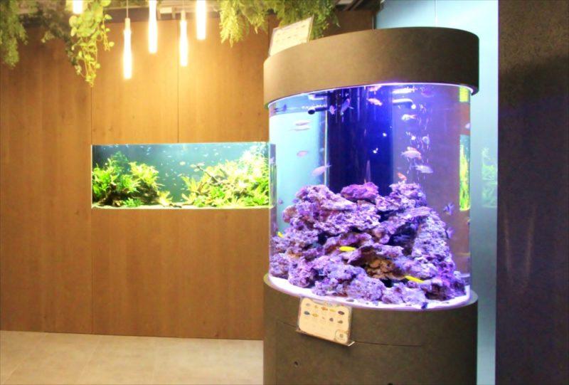 オフィス 円柱海水魚水槽・大型淡水魚水槽を設置  水槽画像3