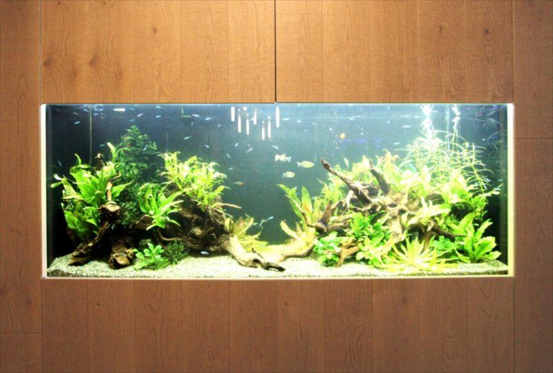 オフィス 円柱海水魚水槽・大型淡水魚水槽を設置  水槽画像4
