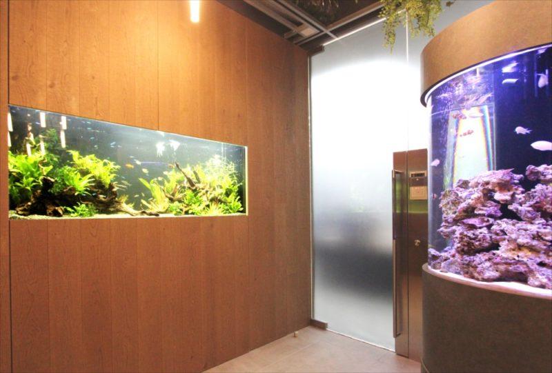 オフィス 円柱海水魚水槽・大型淡水魚水槽を設置  水槽画像5