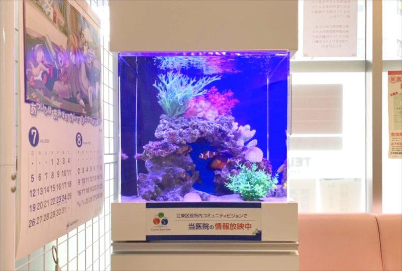 クリニックの待合室 45cm海水魚水槽 設置事例 水槽画像3