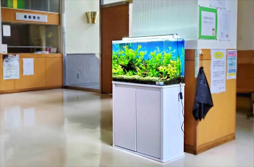 急病センター 待合室 60cm淡水魚水槽 設置事例