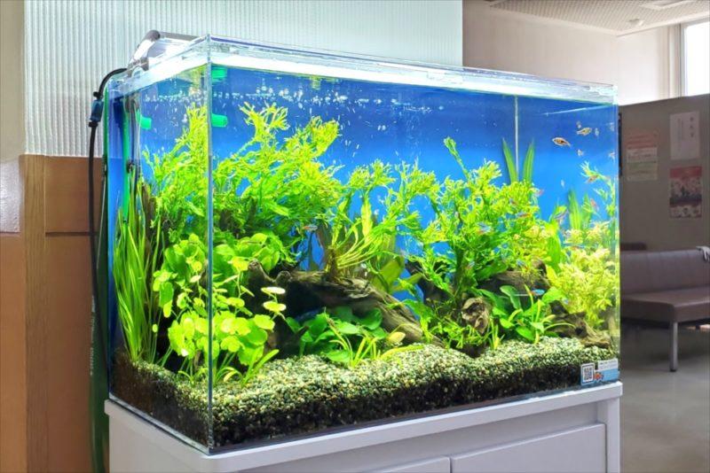 急病センター 待合室 60cm淡水魚水槽 設置事例 水槽画像2