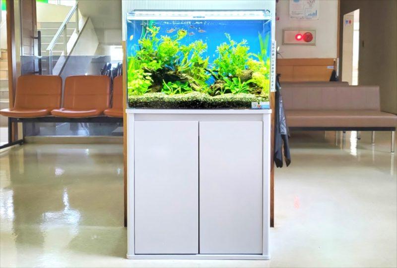 急病センター 待合室 60cm淡水魚水槽 設置事例 水槽画像3