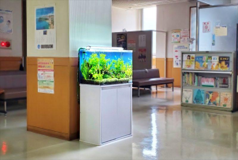 急病センター 待合室 60cm淡水魚水槽 設置事例 水槽画像4