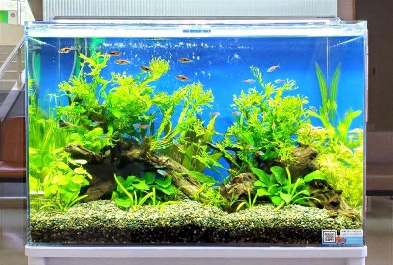 急病センター 待合室 60cm淡水魚水槽 設置事例 水槽画像5