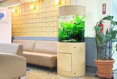 病院の待合室に設置 60cm円柱淡水魚水槽リース事例 その後