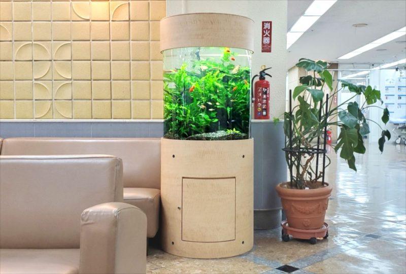 病院の待合室に設置 60cm円柱淡水魚水槽 その後 水槽画像2