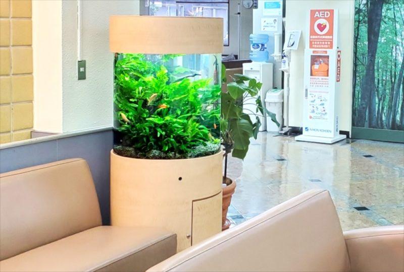 病院の待合室に設置 60cm円柱淡水魚水槽 その後 水槽画像3