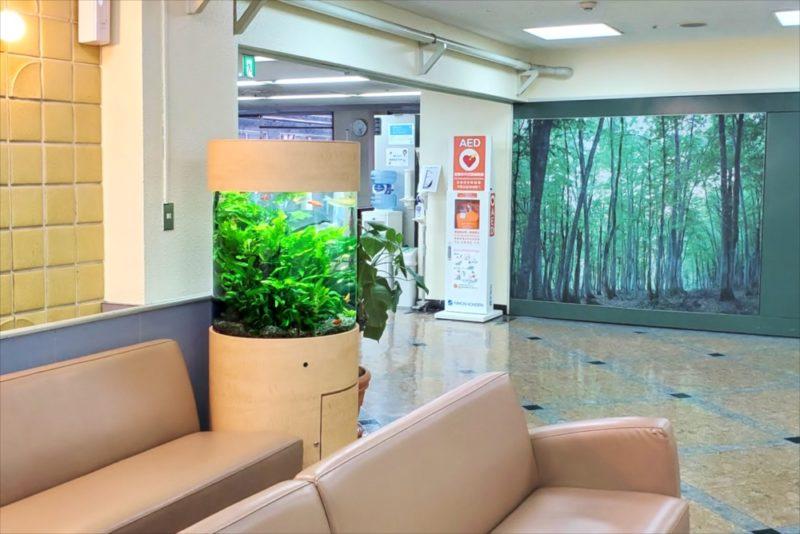 病院の待合室に設置 60cm円柱淡水魚水槽 その後 水槽画像5