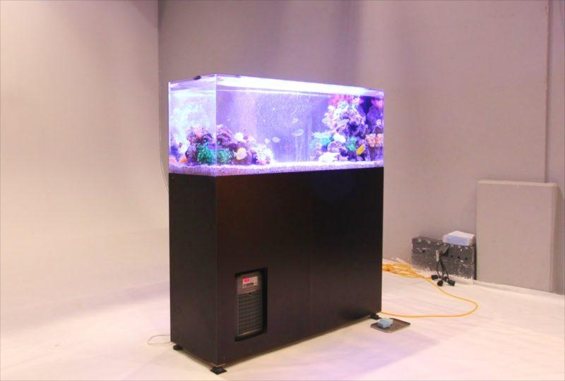 雑誌撮影 150cm海水魚水槽 短期レンタル事例 水槽画像3