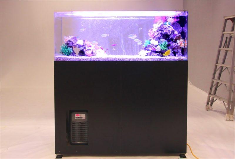 雑誌撮影 150cm海水魚水槽 短期レンタル事例 水槽画像4