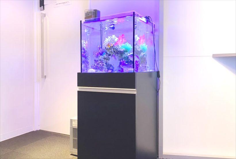 新宿オフィス 45cm・120cm海水魚水槽 設置事例 その後