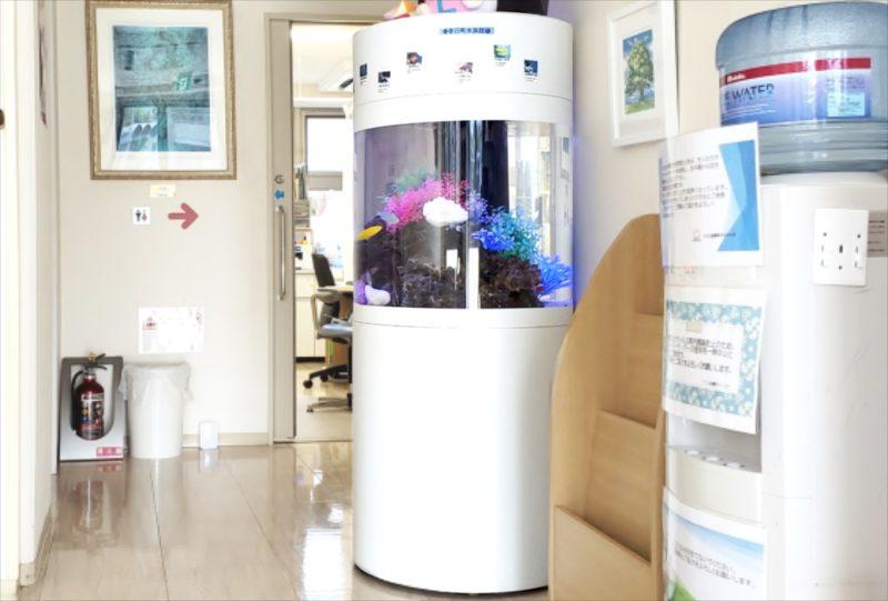 注目度抜群! 円柱(丸型)水槽 クリニックに設置 水槽画像2