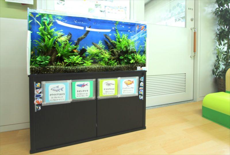 港区保育園 90cm淡水魚水槽 設置事例 水槽画像1