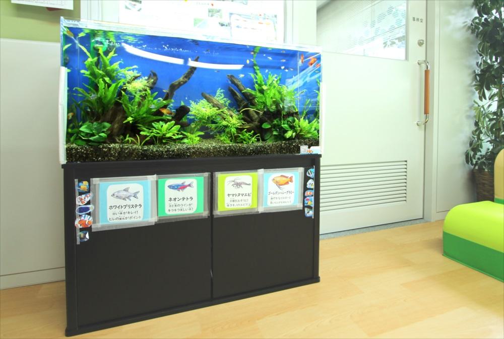 港区保育園 90cm淡水魚水槽 設置事例