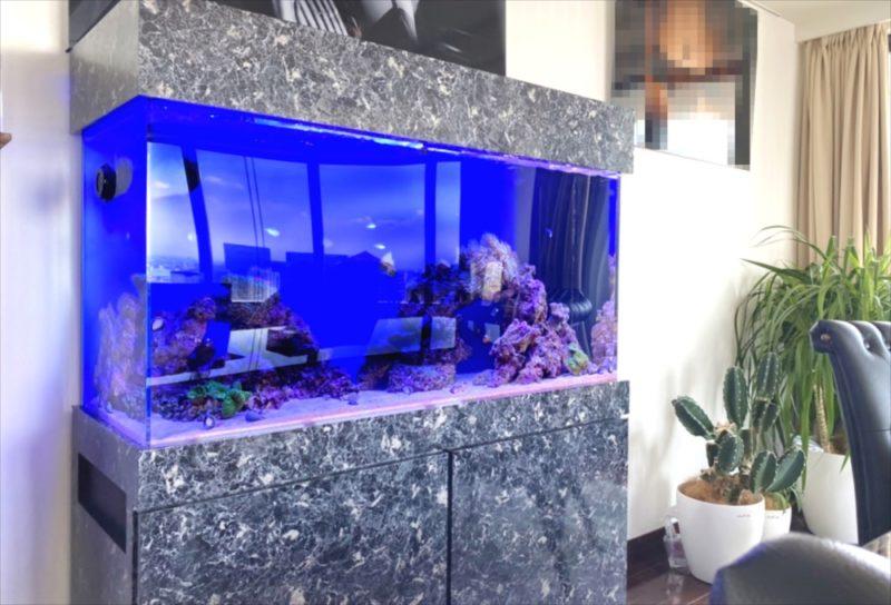 幻想的なサンゴ水槽 オフィス事務所に設置 港区 水槽画像2