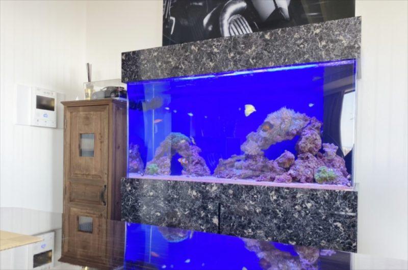 幻想的なサンゴ水槽 オフィス事務所に設置 港区 水槽画像1