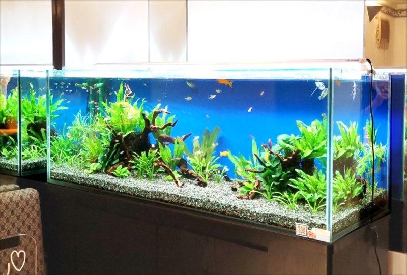飲食店 120cm淡水魚水槽 設置事例 吉祥寺 水槽画像2