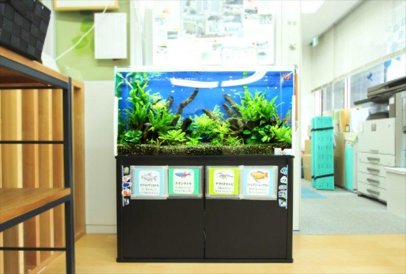 港区保育園 90cm淡水魚水槽 設置事例 水槽画像2