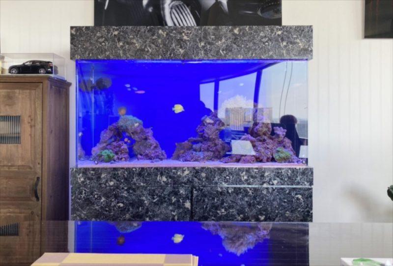 幻想的なサンゴ水槽 オフィス事務所に設置 港区 水槽画像3