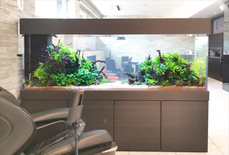 お洒落なインテリア水槽!自宅兼事務所に設置 水槽画像3