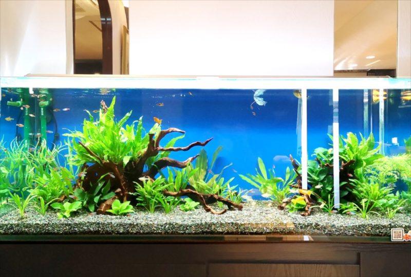 飲食店 120cm淡水魚水槽 設置事例 吉祥寺 水槽画像4
