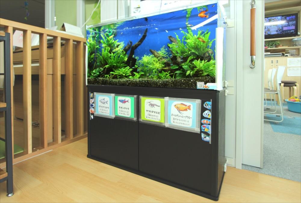 港区保育園 90cm淡水魚水槽 斜め画像