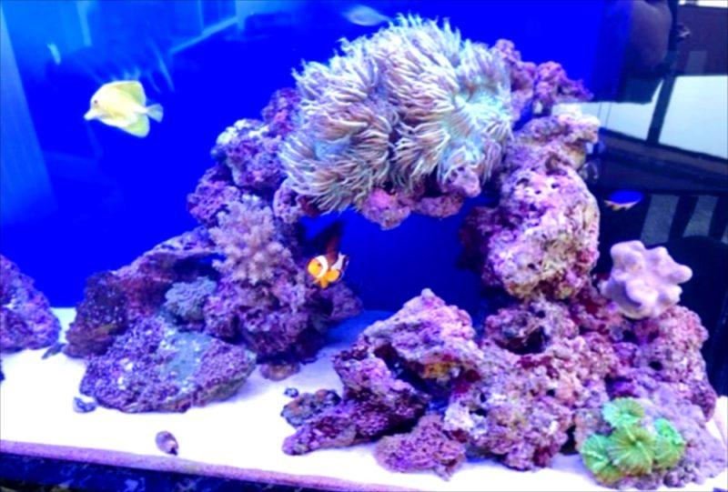 幻想的なサンゴ水槽 オフィス事務所に設置 港区 水槽画像5