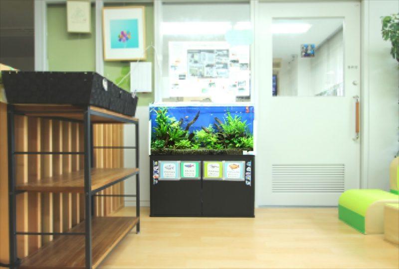 港区保育園 90cm淡水魚水槽 設置事例 水槽画像5