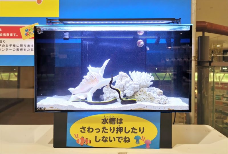 ショッピングセンター 短期イベント 展示水槽 短期レンタル事例 水槽画像5