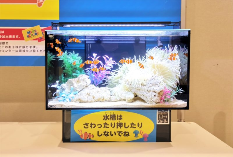 ショッピングセンター 短期イベント 展示水槽 短期レンタル事例 水槽画像3