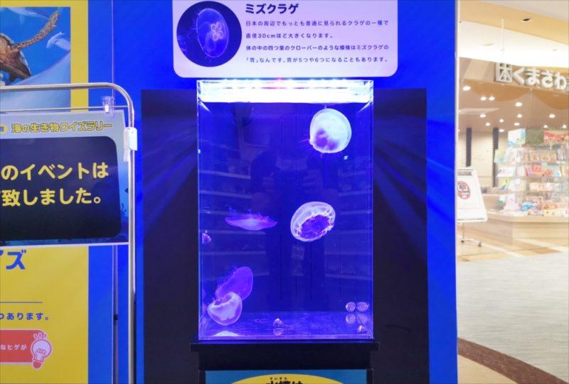 ショッピングセンター 短期イベント 展示水槽 短期レンタル事例 水槽画像4
