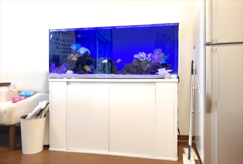 オフィスに設置 120cm海水魚水槽をメンテナンス管理 メイン画像