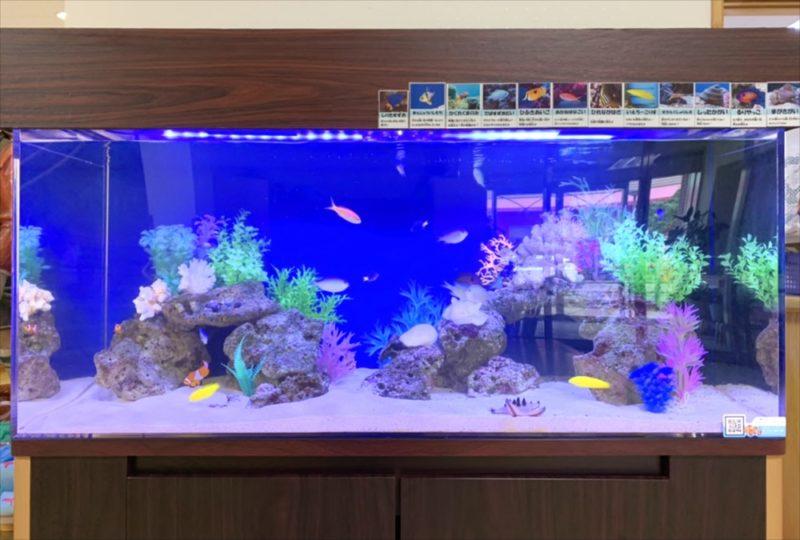 幼稚園のエントランス 120cm海水魚水槽 リース事例 水槽画像3