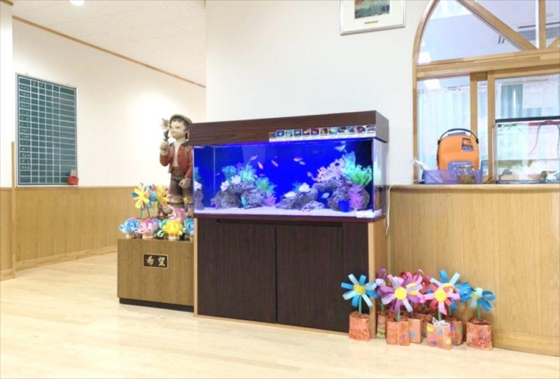 幼稚園のエントランス 120cm海水魚水槽 リース事例 水槽画像4