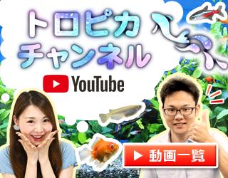 動画でアクアリウム解説!