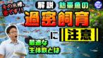 YouTube更新「【密は危険です】熱帯魚の過密飼育に注意!最適な生体の匹数をプロが解説!」