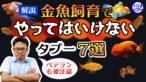 """YouTube更新「金魚飼育でやっては""""いけない""""こと7選!タブーの理由も解説!ベテランも要注意」"""