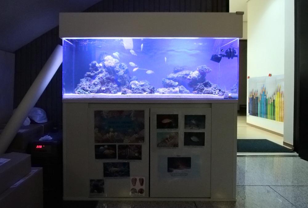 インターナショナル 120cmサンゴ水槽 正面画像