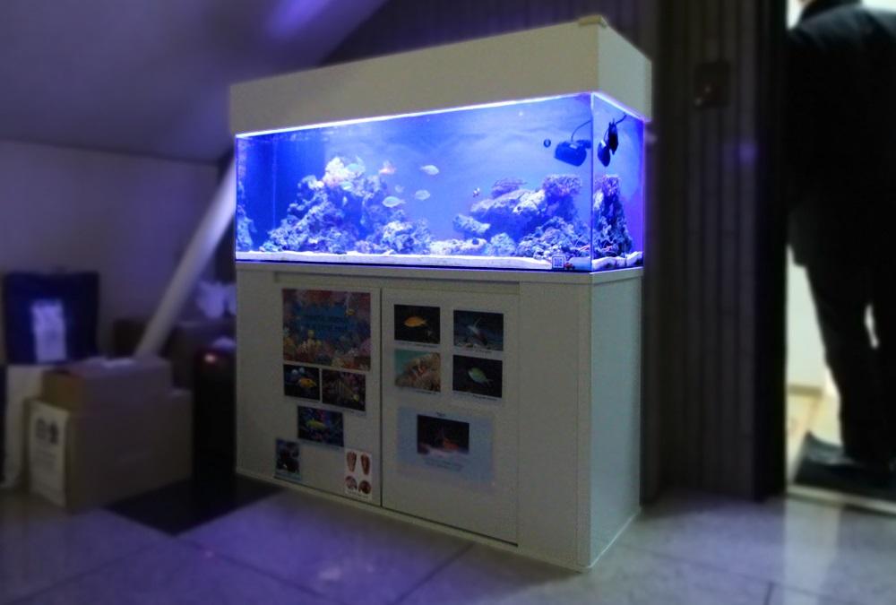 インターナショナル 120cmサンゴ水槽 斜め全体画像