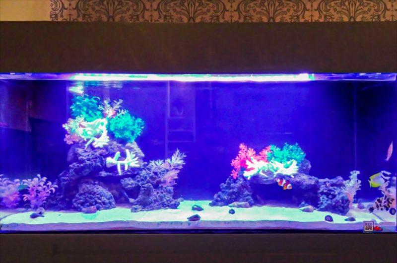 ホテルのエントランス 120cm海水魚水槽 その後 水槽画像2