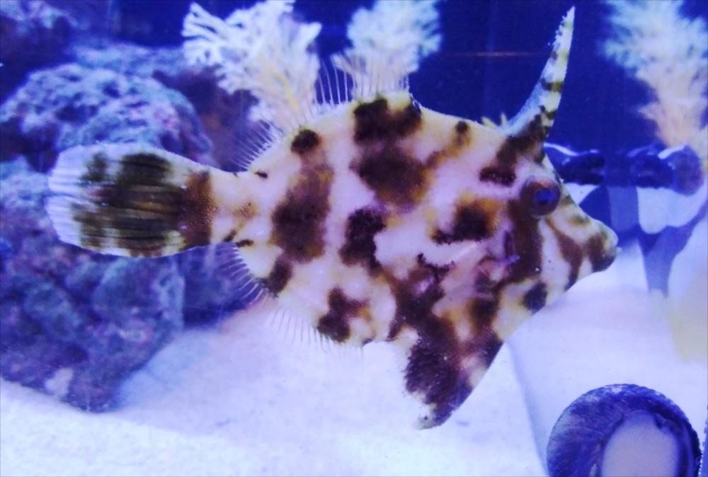 ホテル 120cm海水魚水槽 熱帯魚画像
