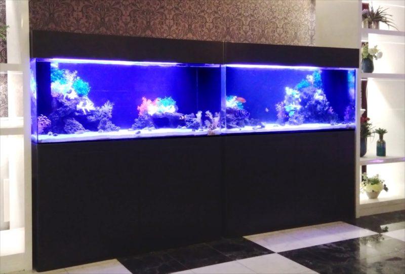 ホテルのエントランス 120cm海水魚水槽 その後 水槽画像4