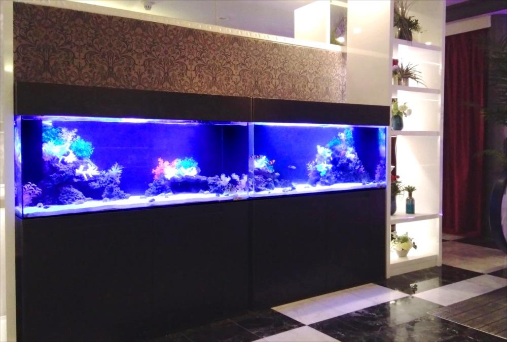 ホテル 120cm海水魚水槽 斜め全体画像