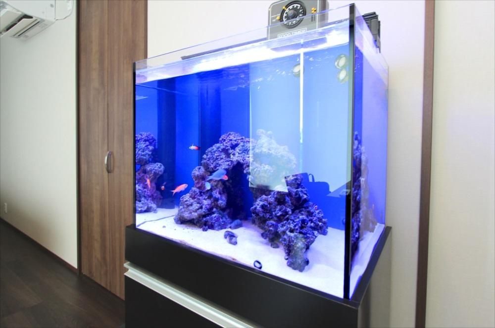 個人宅 60cm海水魚水槽 左斜め画像