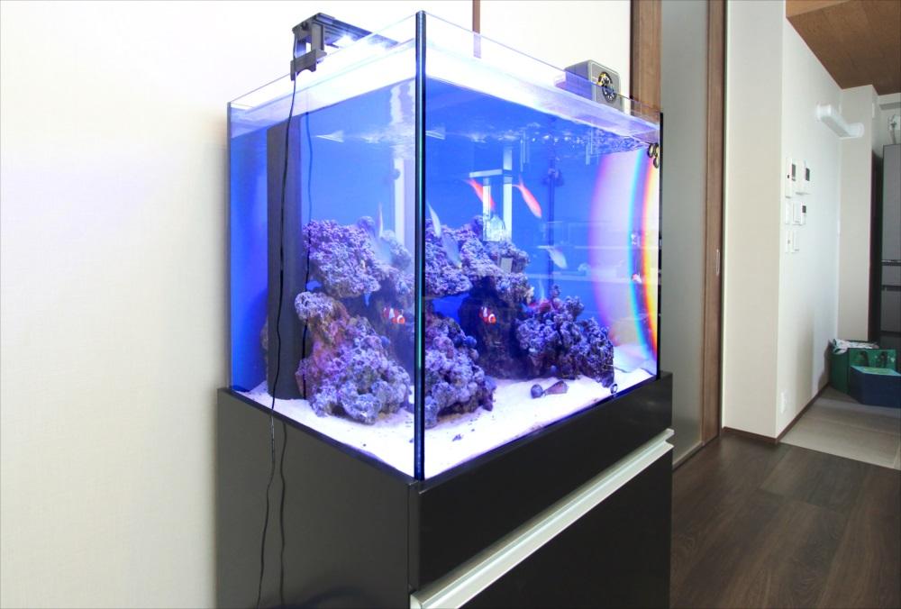 個人宅 60cm海水魚水槽 斜めアップ画像